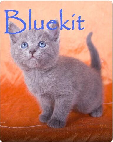 File:Bluekit.jpg