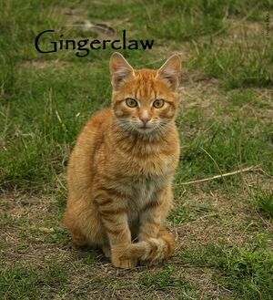 Gingerclaw