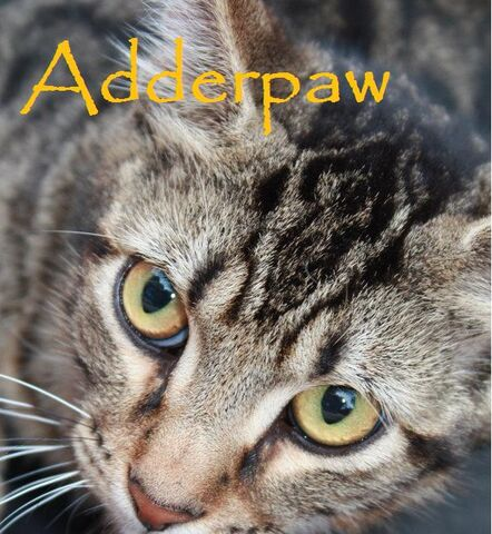 File:Adderpaw.jpg