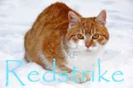 Redstrike