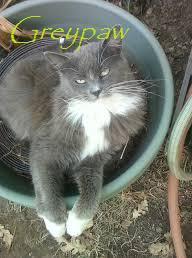 Greypaw