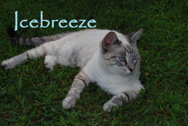 File:Icebreeze.jpg