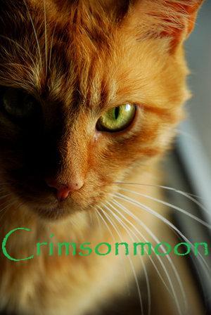 File:Crimsonmoon.jpg