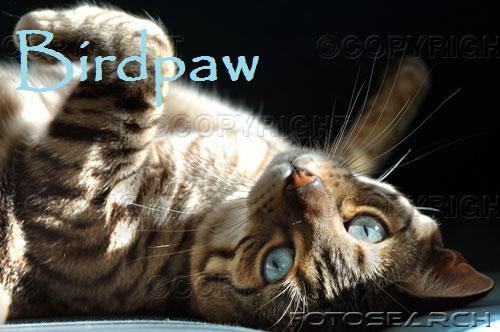 File:Birdpaw.jpg