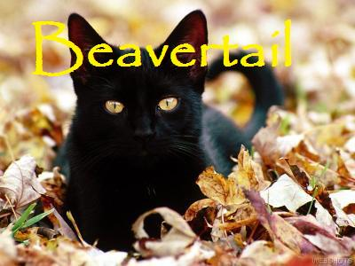 File:Beavertail.jpg