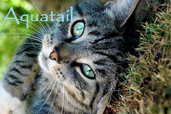 File:Aquatail.jpg
