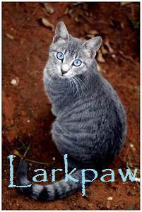 File:Larkpaw.jpg