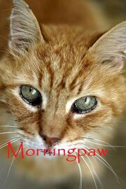 Morningpaw