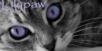 Lilypaw