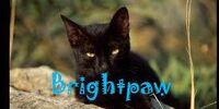 Brightpaw