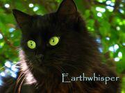 Earthwhisper
