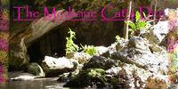 Medicine Cat's Den