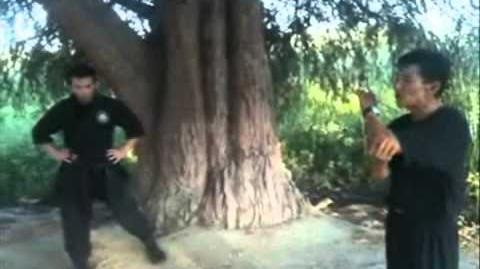 忍者 間者 (Tiger climbing techniques)