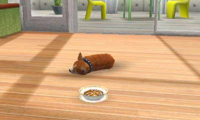 File:Dietcat china.JPG