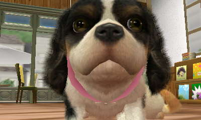 File:Cavalier face.JPG