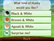 Color options husky