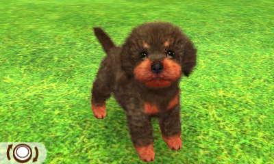 File:Blackred poodle.JPG