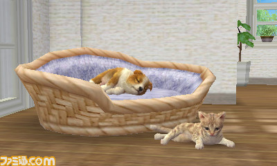 File:Dog-and-cat-resting-1-.jpg