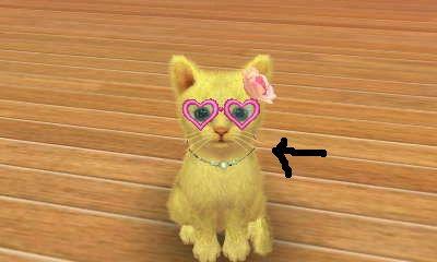 File:Nitendogs Cats 066.jpg