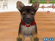 Nintendogs g.shepherd