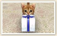 Cat with Present (2)