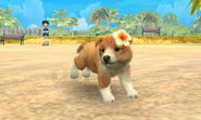3DS pictures 016
