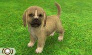 Beagle-odd2