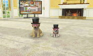 Nintendogs+Cats;0 017