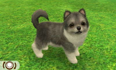 Pomeranian | Nintendogs + Cats Club Wiki | FANDOM powered