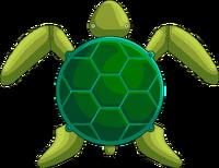 Sea turtle REAL