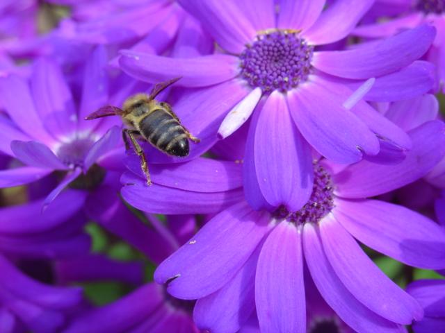File:Flower and Bee.jpg