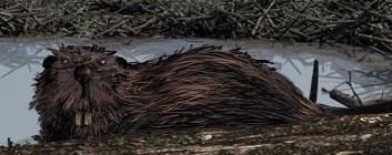 File:King Beaver.jpg