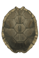Sharpened Turtle Shell Shield