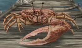 File:Fiddler Crab.jpg