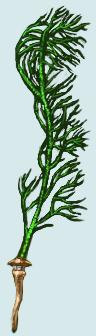 File:Seaweed Whip.jpeg