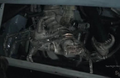 Southern-Hemespheric Sea Scorpion