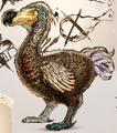 Dodo (ARK)
