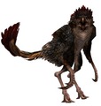 Crested Ntouka Bird
