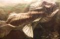 Papilio (Papiliomonstrus opico)