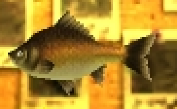 File:Groovy Carp.png