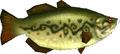 Hyrule Bass