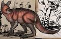 Procoptodon vivencurrus