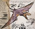 Dimorphodon equesica