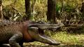 Ragin Cajun Redneck Gator