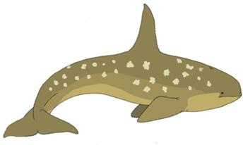 File:Alula Whale.png