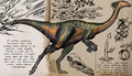 Gallimimus evolvelox