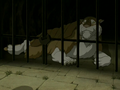 Armadillo Lion