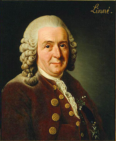 File:Carolus Linnaeus (cleaned up version).jpg