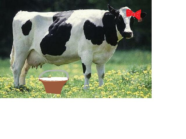 File:Linda the Cow.jpg
