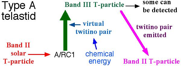 File:Type A telastid diagram.png